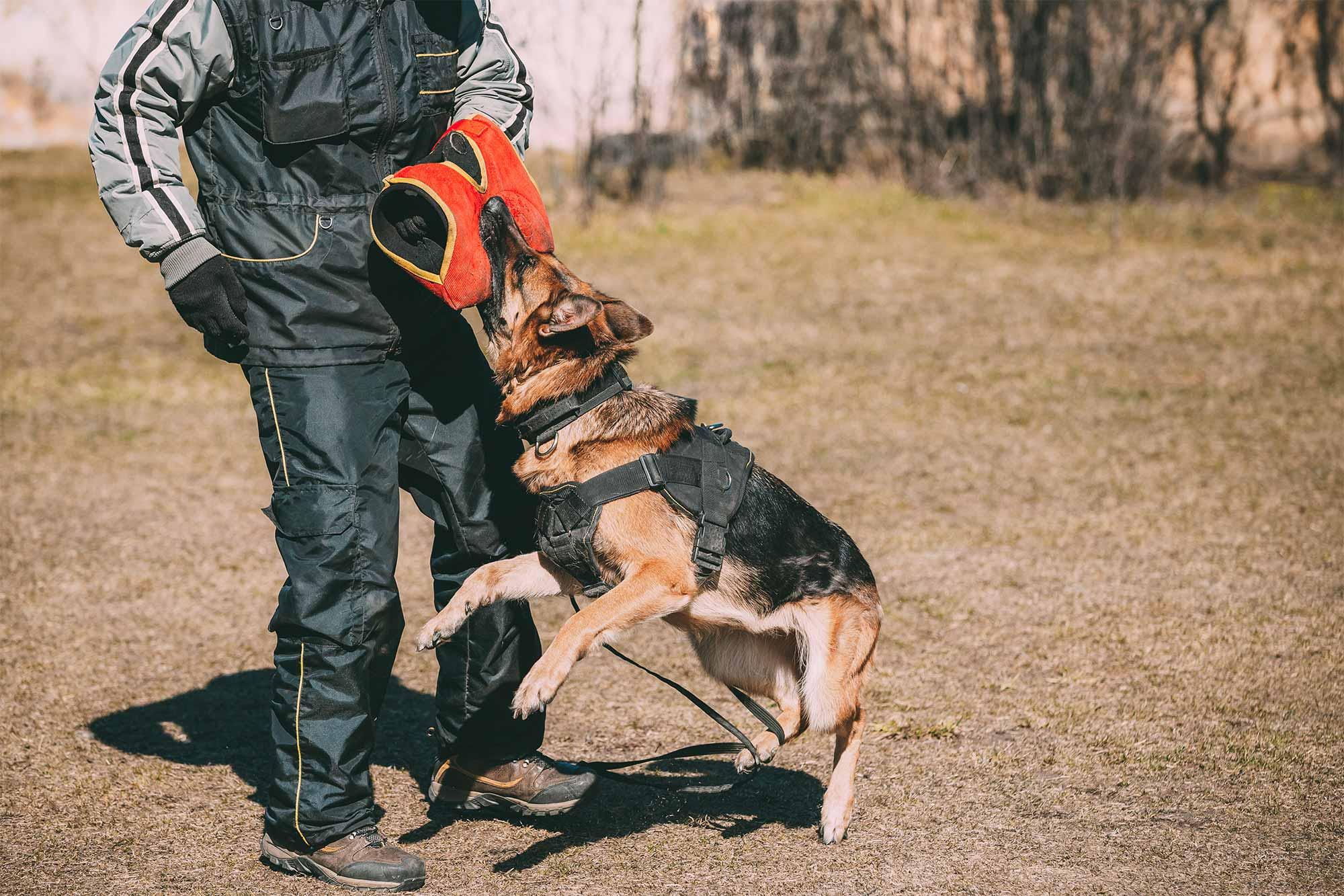 Hund beim Training